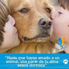 Nuestras almas son despiertas y festivas #FraseDelDÍaCVP www.clinicaveterinariapoblado.com