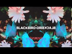 Blackbird Blackbird - Waikiki - YouTube