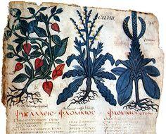 Herbal of Dioscorides