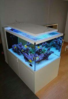 Tank Marine Aquarium Fish, Coral Reef Aquarium, Aquarium Stand, Aquarium Setup, Home Aquarium, Aquarium Design, Aquarium Decorations, Marine Fish, Aquarium Ideas