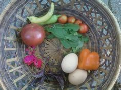 Oh the anticipation....soon ----homegrown veggies go into making an amazing dinner salad. mmm, organic heirloom tomatoes!