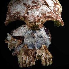 """Aug. 20, 2012 - Newly found pieces of human skull from """"the Cave of the Monkeys"""" in Laos are the earliest skeletal evidence yet that humans once had an ancient, rapid migration to Asia.  A skull found in Laos suggests human migrated to southern Asia 20,000 years earlier than thought. The discovery suggests that the first modern humans to leave Africa spread around the world much earlier."""