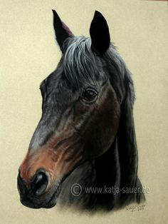 Pferdezeichnungen und Pferdeportraits in Pastellkreide - Tierzeichnungen und Tierportraits von Katja Sauer / Horse drawings and horse portraits in soft pastels - Animal paintings and animal portraits by Katja Sauer