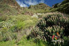 Lomo La Saliba #senderismo #hiking #outdoors #trkking #masca #landscape #tenerifesenderos