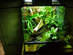 Dart Frog Vivarium (8) | Flickr - Photo Sharing!
