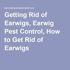 Natural Ways To Get Rid Of Earwigs In The House White Wigs Online