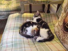 Cute kittens called Gin & Tonic ..Langar Hall