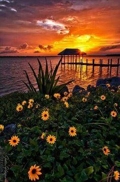 Sunset and sunflower
