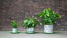 Magnifique ! Un pot origami qui grandi avec la plante !