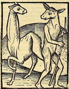 Woodcuts from 'Ortus Sanitatis' (1497)