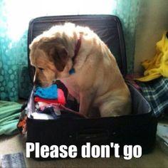 Please don't go.