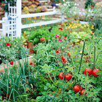 Veggie Gardens: Tips for Beginners (Better Homes & Gardens)