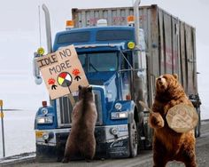 Bears support Idle No More.