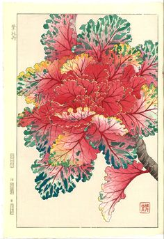 Artist Kawarazaki Shodo Japanese Woodblock Print Name Habotan (Ornamental Cabbage) Approx Image Size Height cm x Width cm (H x W Date Originally published in Showa mid-term era by Unsodo. This is a later edition from the original blocks. Botanical Drawings, Botanical Illustration, Botanical Prints, Illustration Art, Japanese Art Styles, Japanese Prints, Ornamental Cabbage, Art Japonais, Japanese Flowers
