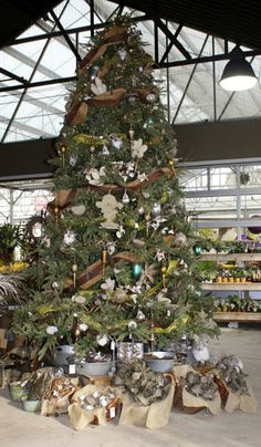#Christmas  From the permanent collection of Christmas trees at The Barn Nursery, Chattanooga, Tn.  www.barnnursery.com 423-698-2276 #Christmas trees #Christmas lights #Christmas ornaments 102613
