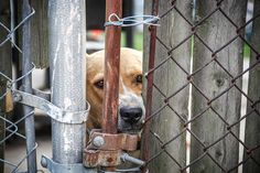 Animal advocates in Bristow, Oklahoma are petitioning the mayor to stop using gunshot as a form of putting down sick and unwanted pups, which activists charge are being dragged to a giant pit & blasted in  the head. http://www.thedailybeast.com/articles/2016/02/04/the-animal-shelter-shooting-its-dogs.html?utm_source=feedburner&utm_medium=feed&utm_campaign=Feed%3A+thedailybeast%2Farticles+%28The+Daily+Beast+-+Latest+Articles%29