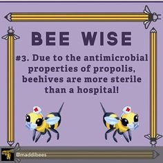 Wisdom of our friends the bees #VOTE at this link so they are #legal to live in #Cambridge & everywhere  http://ift.tt/1Mu50a9?  #bees #beekeeping #urban #pollinators #policy #honey #propolis #pollen #freedom #beekeepers #harmony #neighbors #CambMA #massachusetts #harvard #FollowTheHoney by followthehoney August 15 2015 at 04:49PM