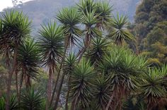 Tropical Plants by Cukoo Mama, via Flickr