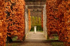 Add this to your Bucket list! University of Guelph Arboretum Cover Pics, Cover Picture, Fall Photos, Day Trip, Great Places, Ontario, Sidewalk, University, Wedding Photography