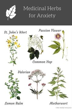 Herbal Medicine herbs for anxiety - Information on the health benefits, traditional uses, active ingredients and side effects of natural herbs for anxiety treatment and relief Salud Natural, Natural Herbs, Natural Healing, Natural Foods, Natural Oil, Holistic Healing, Natural Beauty, Holistic Wellness, Healing Herbs