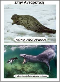 Ιδέες για το νηπιαγωγείο(εποπτικό υλικό,δραστηριότητες,κατασκευές). Polar Animals, In Kindergarten, Continents, Whale, Preschool, Activities, Winter Craft, Bebe, Whales