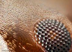 Ant eye by Johann Swanepoel