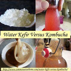 Water Kefir versus Kombucha @ Common Sense Homesteading