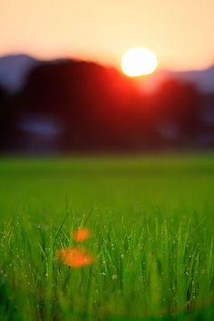 A rice field  Naraha-machi. Fukushima. Japan