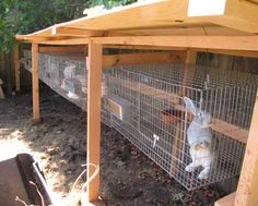 Getting started with rabbits? (great forum thread with lots of info) Rabbit Cages Outdoor, Wire Rabbit Cages, Outdoor Rabbit Hutch, Bunny Cages, Rabbit Shed, Rabbit Hutch Plans, House Rabbit, Rabbit Hutches, Meat Rabbits