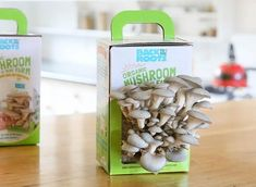Grow Tomatoes From Seed Organic Mushroom Growing Kit – Homegrown Mushrooms – Learn Mushroom Farming – Back to the Roots -