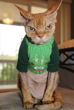 Funny Animal Pictures Of The Day – 35 Pics - Gremlin cat!