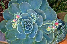 Veja aqui 4 dicas de plantas ornamentais ideais para ambientes internos e encha a sua casa de vida, alegria e, claro, flores!