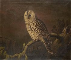 """A Ural owl perching on a branch"",  Ferdinand von Wright (1822-1906)"