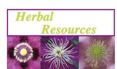 Dreaming A Beautiful World: Milk Thistle : Herbal Protection from pollution, including radiation