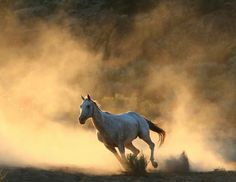Department of Land Management rounding up (capturing) Wild horses.. A Symbol of the AMERICAN WEST no longer??