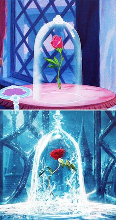 The rose she had offered was truly an enchanted rose, which would bloom until his 21st year.