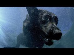 Underwater dogs - Pets - Wild at Heart: Episode 1 Preview - BBC One - YouTube