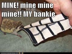 This is like my hedgehog he does this with one of my moms jackets