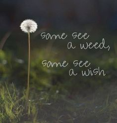 Some see a weed, some see a wish. #inspiration #quote #resolution