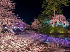 検索 - Google+ By Shunji Takada at Hirosaki Park in Hirosaki City Aomori Prefecture