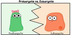 Célula procariota vs. eucariota