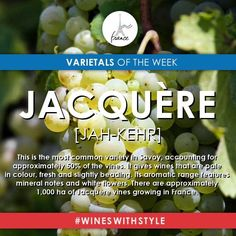 This grape is used for six wines, the most important of which are in Chambéry's transverse valley (Apremont, Abymes, Chignin, St-Jeoire-Prieuré), in Combe de Savoy (Cruet) and west of Lake Bourget (Jongieux). Have your tried any #WinesWithStyle made with this grape? :)