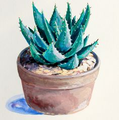 Plant Art Aloe Painting Gouache on Paper 8 x 8 by HeatherMcCawArt