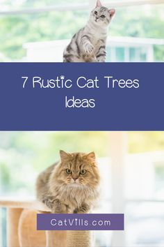 So, you want a few rustic cat trees that will perfectly fit in with your farmhouse decor, right? I've got you covered, my friend! Below, we'll take a look at my top 7 favorite options that you can buy right now. Cat Tree, Farmhouse Decor, Rustic, Cats, Stuff To Buy, Country Primitive, Gatos, Kitty Cats, Farmhouse Style