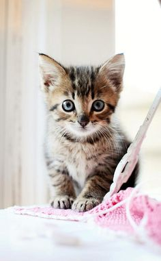 This cat is cute.