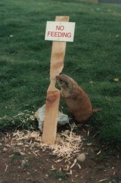 餌をあげないでください
