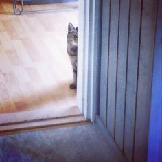Eyes On The Prize, Small Cat, Doorway, Big Cats, Curiosity, Cat Day, Finland, Cats Of Instagram, Cat Lovers