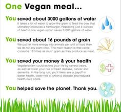 What one Vegan meal can do ❤ Info-graphic
