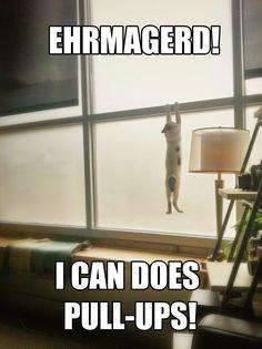 Kitty pull-ups.