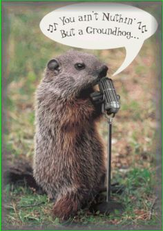 You aint  nothin'  but a groundhog...cryin' all the time.....